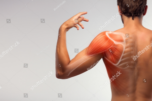 massage therapy for shoulders